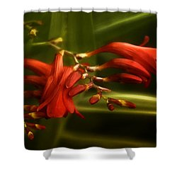 Lambency Shower Curtain