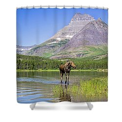 Land Of The Moose Shower Curtain