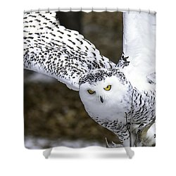 Landing Of The Snowy Owl Where Are You Harry Potter Shower Curtain by LeeAnn McLaneGoetz McLaneGoetzStudioLLCcom