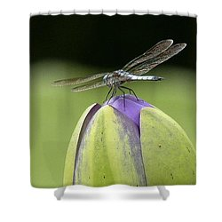 Landing Pad Shower Curtain by Yvonne Wright
