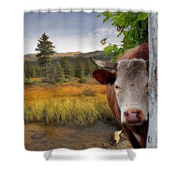 Landscape - Animals - Peek A Boo Cow Shower Curtain by Liane Wright