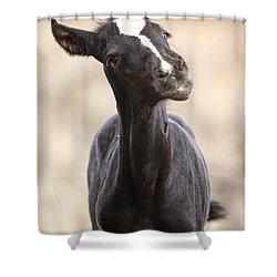 Lansa - A Wild Mustang Colt Shower Curtain