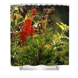Shower Curtain featuring the photograph Lantern Plant by Brenda Brown
