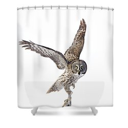 Lapland Owl On White Shower Curtain by Mircea Costina Photography