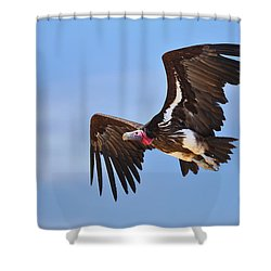 Lappetfaced Vulture Shower Curtain by Johan Swanepoel