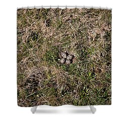 Lapwing Nest Shower Curtain