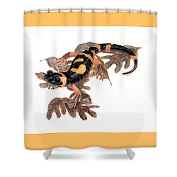 Large Blotched Salamander On Oak Leaves Shower Curtain by Cindy Hitchcock