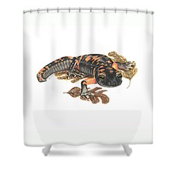 Large Blotched Salamander2 Shower Curtain