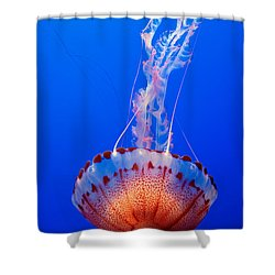 Large Colorful Jellyfish Atlantic Sea Nettle Chrysaora Quinquecirrha  Shower Curtain by Jamie Pham