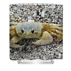 Shower Curtain featuring the photograph Ghost Crab by Cynthia Guinn