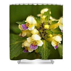 Shower Curtain featuring the photograph Large Flowered Hemp-nettle by Liz  Alderdice