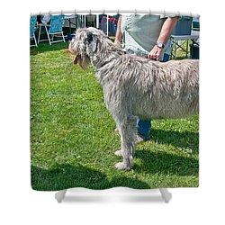 Large Irish Wolfhound Dog  Shower Curtain