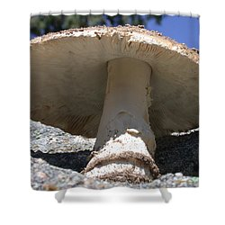 Large Mushroom Shower Curtain