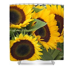 Large Sunflowers Shower Curtain by Chrisann Ellis