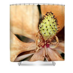 Last Days Of A Magnolia Shower Curtain by Sabrina L Ryan