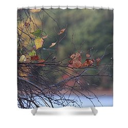 Shower Curtain featuring the photograph Last Leaves by Vadim Levin