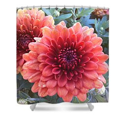 Shower Curtain featuring the photograph Last Of The Summer by Denyse Duhaime