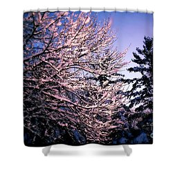 Last Peek Of Winter Sun Shower Curtain