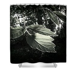 Last Rays II Shower Curtain
