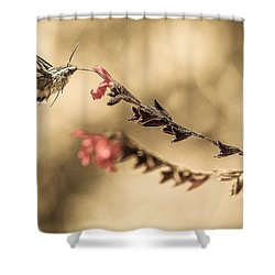Last Thoughts Shower Curtain by Cecil K Brissette