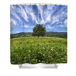 Last Tree Shower Curtain by Debra and Dave Vanderlaan