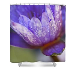 Late Afternoon Dream Shower Curtain by Priya Ghose