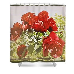 Late Summer Roses - Dreamy Shower Curtain