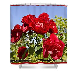 Late Summer Roses - Vibrant Shower Curtain