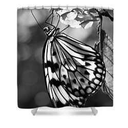 Lavalier Shower Curtain by Nikolyn McDonald