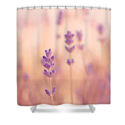 Lavandines 02 - S09a Shower Curtain