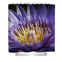 Shower Curtain featuring the photograph Lavendar Lily by Laurie Perry