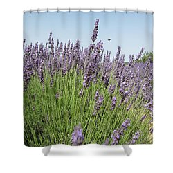 Lavender And The Bee Shower Curtain by Pema Hou