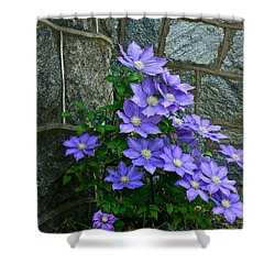 Lavender Clematis At St. Martin's Church Shower Curtain by Byron Varvarigos