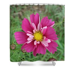 Lavender Cosmo Shower Curtain