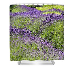 Shower Curtain featuring the photograph Lavender Day by Kathy Bassett