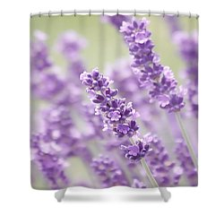 Lavender Dreams Shower Curtain by Kim Hojnacki