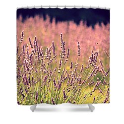 Lavender Dreams Shower Curtain by Lynn Sprowl