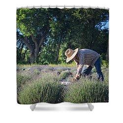 Lavender Harvest Shower Curtain