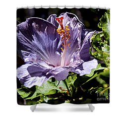 Lavender Hibiscus Shower Curtain