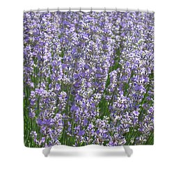 Shower Curtain featuring the photograph Lavender Hues by Pema Hou