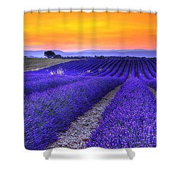 Lavender's Sunset Shower Curtain by Midori Chan