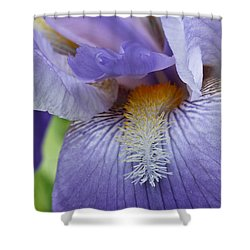 Lavish Iris Shower Curtain by Julie Andel