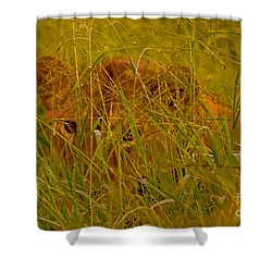 Shower Curtain featuring the photograph Laying In The Grass by J L Woody Wooden