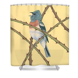Lazuli Bunting Shower Curtain by Nathan Marcy