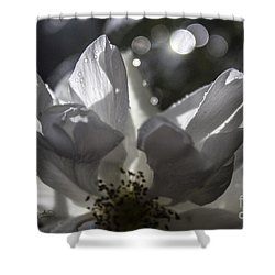 Lazy Afternoon White Rose Shower Curtain by Ginette Callaway