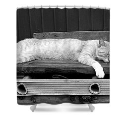 Shower Curtain featuring the photograph Lazy Cat by Andrea Anderegg
