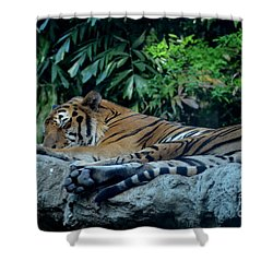 Lazy Cat Shower Curtain by Michelle Meenawong