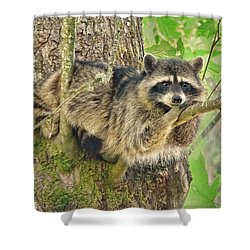 Lazy Day Raccoon Shower Curtain by Jennie Marie Schell