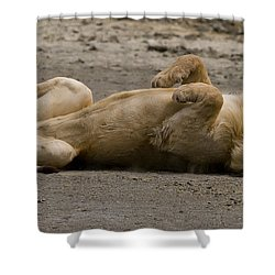 Shower Curtain featuring the photograph Lazy Lion by J L Woody Wooden