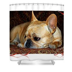 Shower Curtain featuring the photograph Lazy Paisley Afternoon by Barbara Chichester